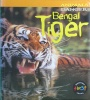 Bengal Tiger Animals In Danger
