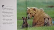 Brown Bear Eye on the Wild